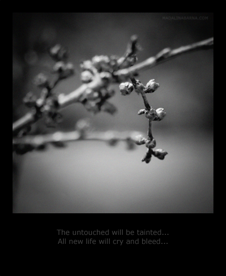 MadalinaBarnaPhotography - The untouched will be tainted...